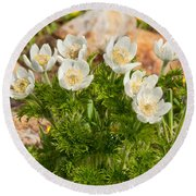 Western Pasqueflower And Buttercups Blooming In A Meadow Round Beach Towel by Jeff Goulden