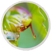 Wet Grape Leaf  Round Beach Towel