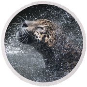 Wet Jaguar  Round Beach Towel