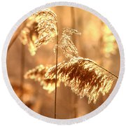 Wetland Sunrise Round Beach Towel by Kenny Glotfelty