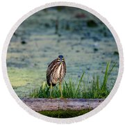 Round Beach Towel featuring the photograph Whatcou Lookin' At? by David Porteus