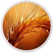 Wheat Close-up Round Beach Towel by Johan Swanepoel