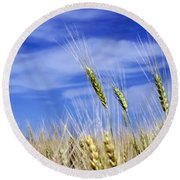 Round Beach Towel featuring the photograph Wheat Trio by Keith Armstrong