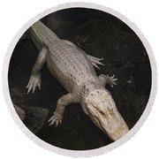 White Alligator Round Beach Towel