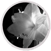 White Amaryllis  Round Beach Towel by Patricia Greer