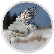White Angel - Snowy Owl In Flight Round Beach Towel