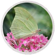 Round Beach Towel featuring the photograph White Angled Sulphur by Judy Whitton