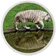 White Tiger Reflections Hawaii Round Beach Towel by Venetia Featherstone-Witty
