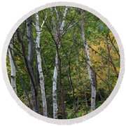 Round Beach Towel featuring the photograph White Birches In The Woods by Denyse Duhaime