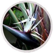 Round Beach Towel featuring the photograph White Bird Of Paradise by Donna Walsh