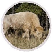 White Bison Symbol Of Hope And Renewal Round Beach Towel
