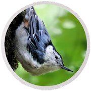 White Breasted Nuthatch Round Beach Towel by Christina Rollo