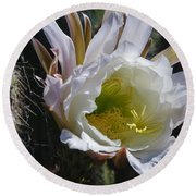 White Cactus Bloom Round Beach Towel