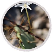 Round Beach Towel featuring the photograph White Cactus Flower by Erika Weber