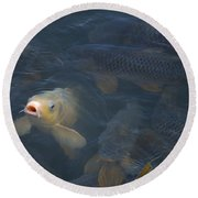 White Carp In The Lake Round Beach Towel