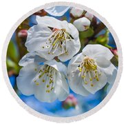 White Cherry Blossoms Blooming In The Springtime Round Beach Towel