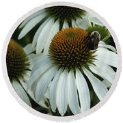 White Coneflowers  Round Beach Towel by James C Thomas