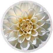 White Dahlia Round Beach Towel by Carsten Reisinger