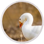 Round Beach Towel featuring the photograph White Duck by Eleanor Abramson