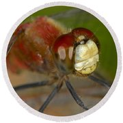 White-faced Meadowhawk Round Beach Towel