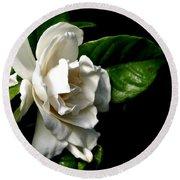 White Gardenia Round Beach Towel by Rose Santuci-Sofranko