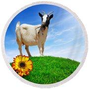 White Goat Round Beach Towel