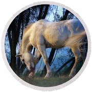 Round Beach Towel featuring the photograph White Horse In The Early Evening Mist by Nick  Biemans