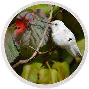 White Hummingbird Round Beach Towel