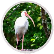 Round Beach Towel featuring the photograph White Ibis by Debra Forand