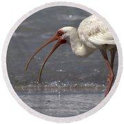 Round Beach Towel featuring the photograph White Ibis On The Beach by Meg Rousher