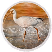 White Ibis Stroll Round Beach Towel by Betsy Knapp