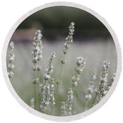 Round Beach Towel featuring the photograph White Lavender by Lynn Sprowl