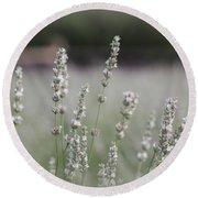 White Lavender Round Beach Towel by Lynn Sprowl