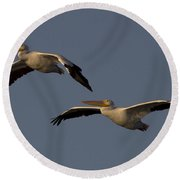 Round Beach Towel featuring the photograph White Pelican Photograph by Meg Rousher