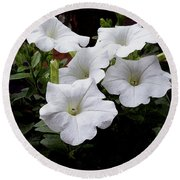 White Petunia Blooms Round Beach Towel