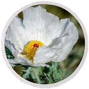 White Prickly Poppy Wildflower Round Beach Towel by Debra Martz