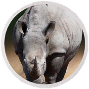 White Rhinoceros  Front View Round Beach Towel