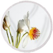 White Sparmannia Africana Plant. Round Beach Towel