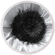 Round Beach Towel featuring the photograph White Sunflower by Jeannie Rhode
