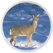 Round Beach Towel featuring the photograph White Tail Deer by Brenda Brown