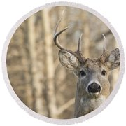 White-tailed Buck Round Beach Towel