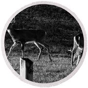 White Tailed Deer Round Beach Towel