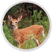 White-tailed Deer Fawn Odocoileus Round Beach Towel