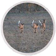 White Tailed Deer Running Round Beach Towel