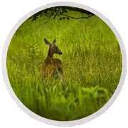 White Tailed Doe Deer In A Field In Cade's Cove Round Beach Towel