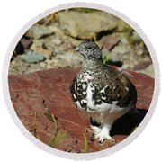 White-tailed Ptarmigan Round Beach Towel