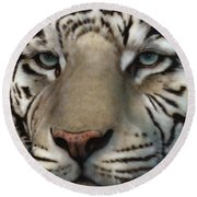 White Tiger - Up Close And Personal Round Beach Towel