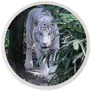 Round Beach Towel featuring the photograph White Tiger  by Shoal Hollingsworth