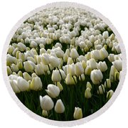 White Tulip Field  Round Beach Towel