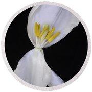 White Tulip On Black Round Beach Towel